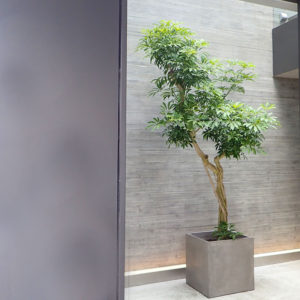 エントランスに大きな木